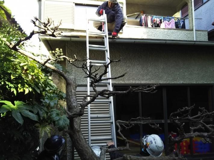 屋根に上るための梯子を設置