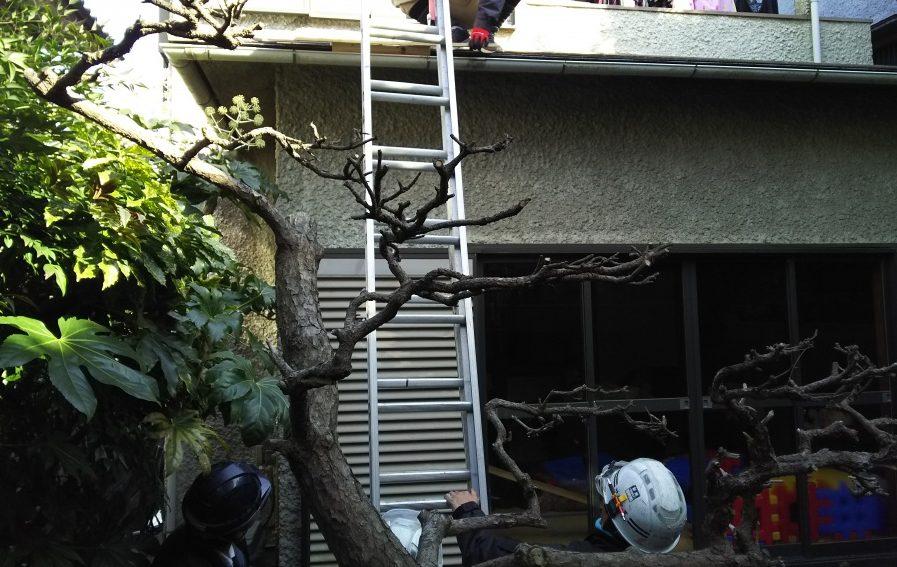 梯子を当て木をかませ架けます。