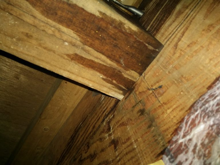 雨漏りしている屋根裏