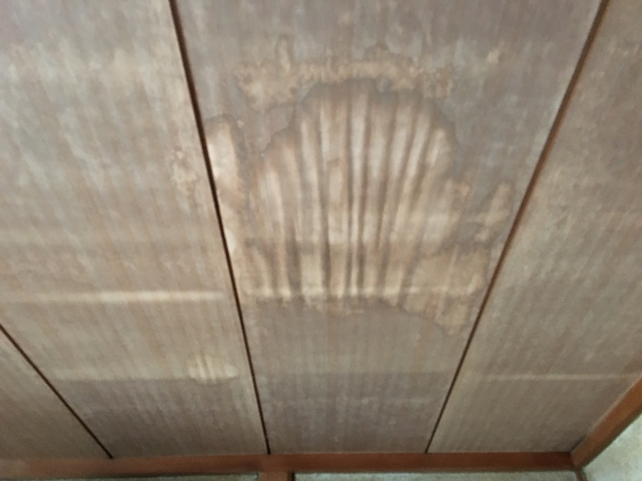 灘区 雨が天井からしみだしてくるとのことで、点検に急行しました!
