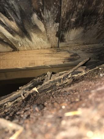 屋根の構造体に雨水による腐食が見られました。
