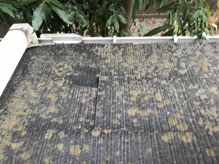 この斑点は、苔が繁殖しています。