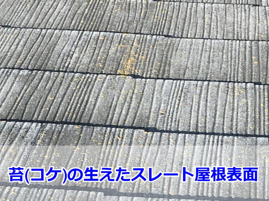 スレート屋根に生えた苔