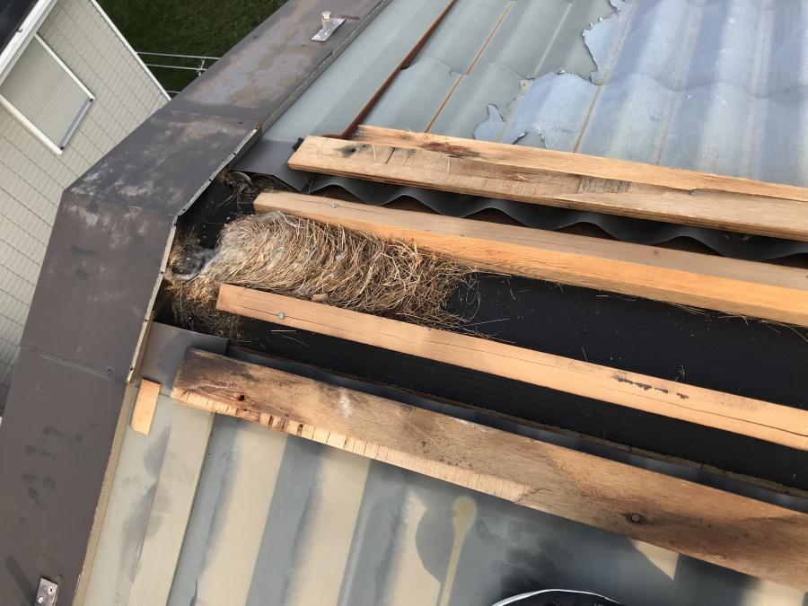 屋根に鳥の巣がありました。