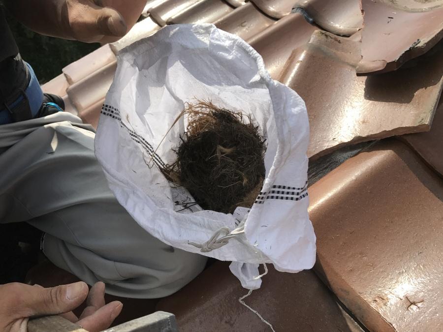 瓦の下には、スズメが巣をつくっていました。