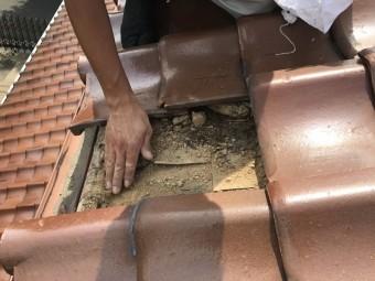 葺き土を撤去、なんばんに備えます。