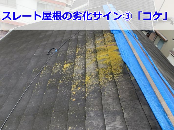 神戸市 コケが生えたスレート屋根